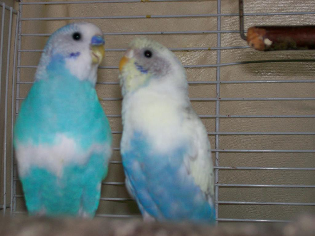 Male and Female-000_0008_04.jpg