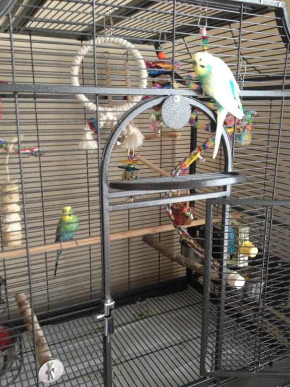 One Budgie or Two?-002.jpg