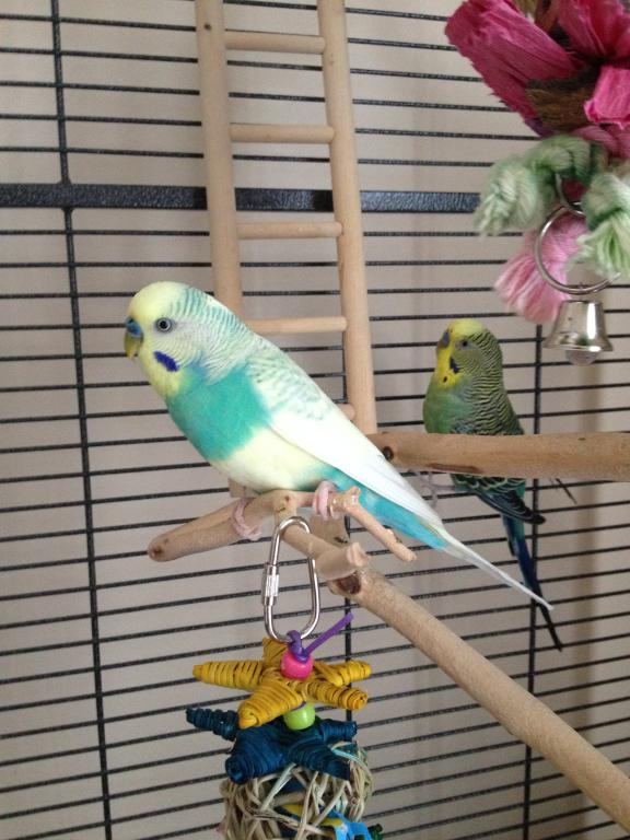 One Budgie or Two?-003.jpg