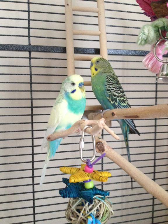 One Budgie or Two?-004.jpg