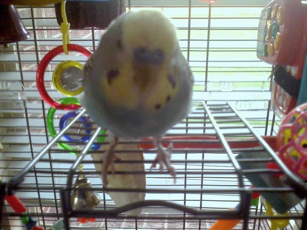 Goodbye Dexter, You Were a Great Bird!-005.jpg