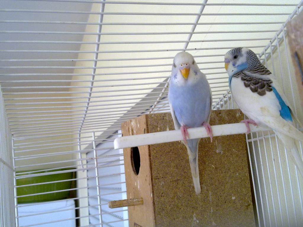 My Birds - New Flock Starting-01102011015.jpg