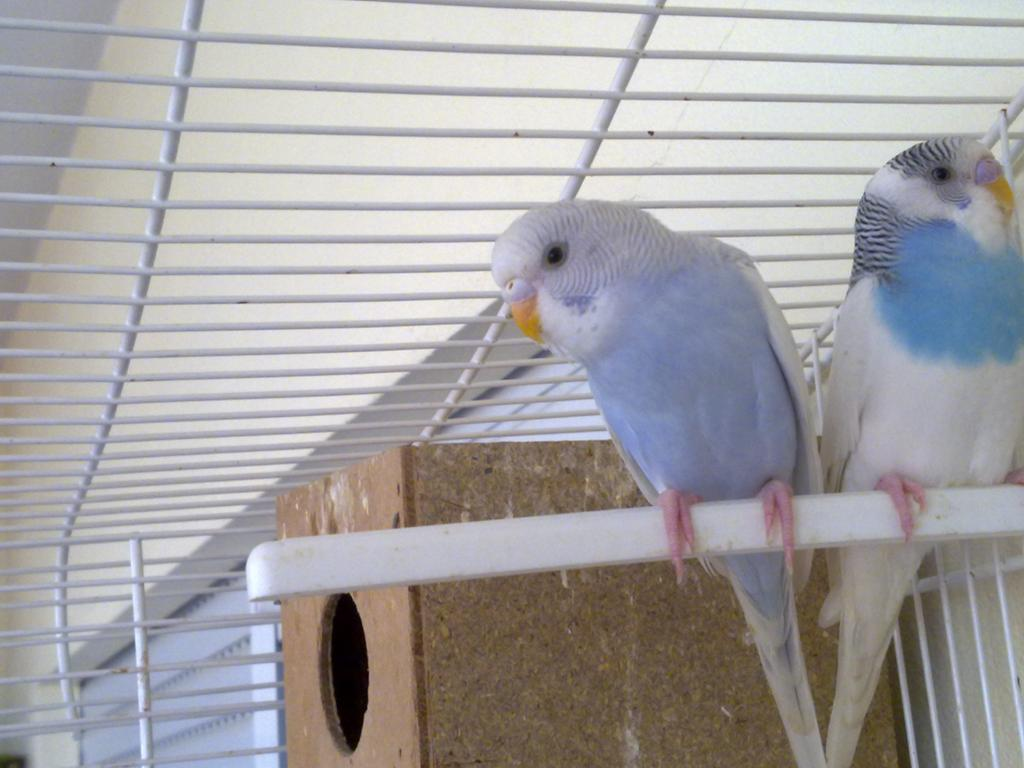 My Birds - New Flock Starting-01102011017.jpg