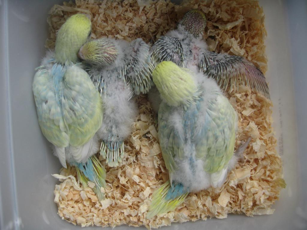 Update on the Chicks..-013.jpg