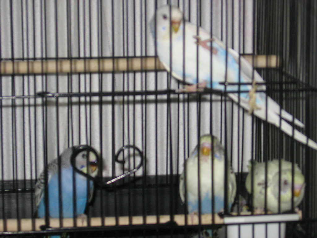 Why are babies cobalt blue rather than sky blue?-020909-1-noelle-3-chicks.jpg