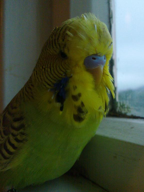 hi Meemo!-03062013781.jpg