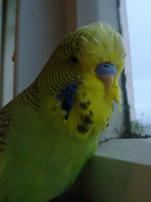 hi Meemo!-03062013784.jpg