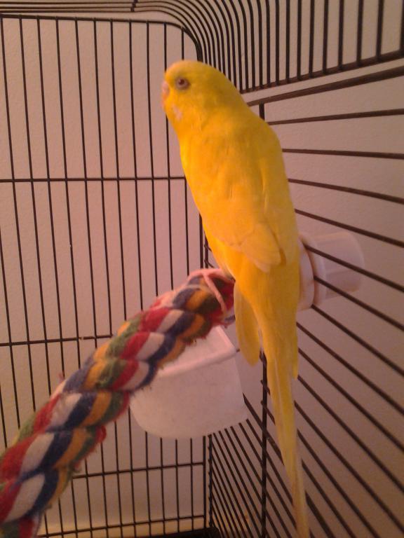First bird, approx 1.5yr female--NAMES!?!?!-0318141848.jpg