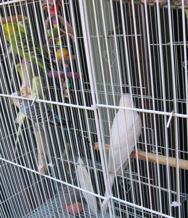 Questions about ino budgies-081912-09.jpg
