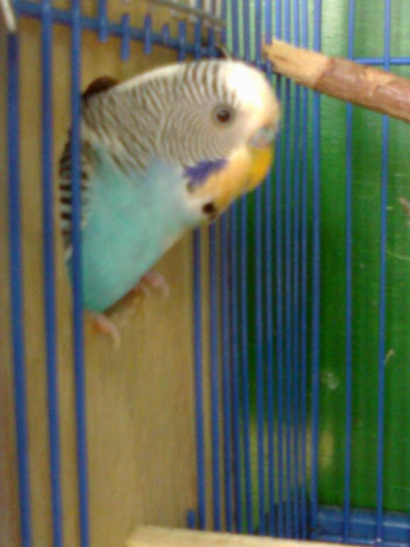 Cage Breeding!-09012012121.jpg