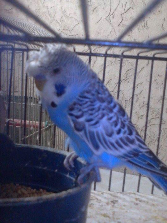Newly birds born at my Aviary-1.jpg