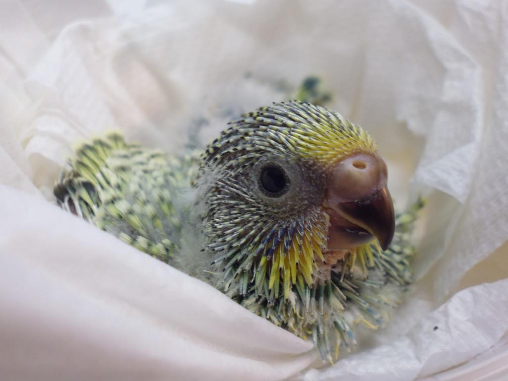 photos of my birds:)-1.jpg