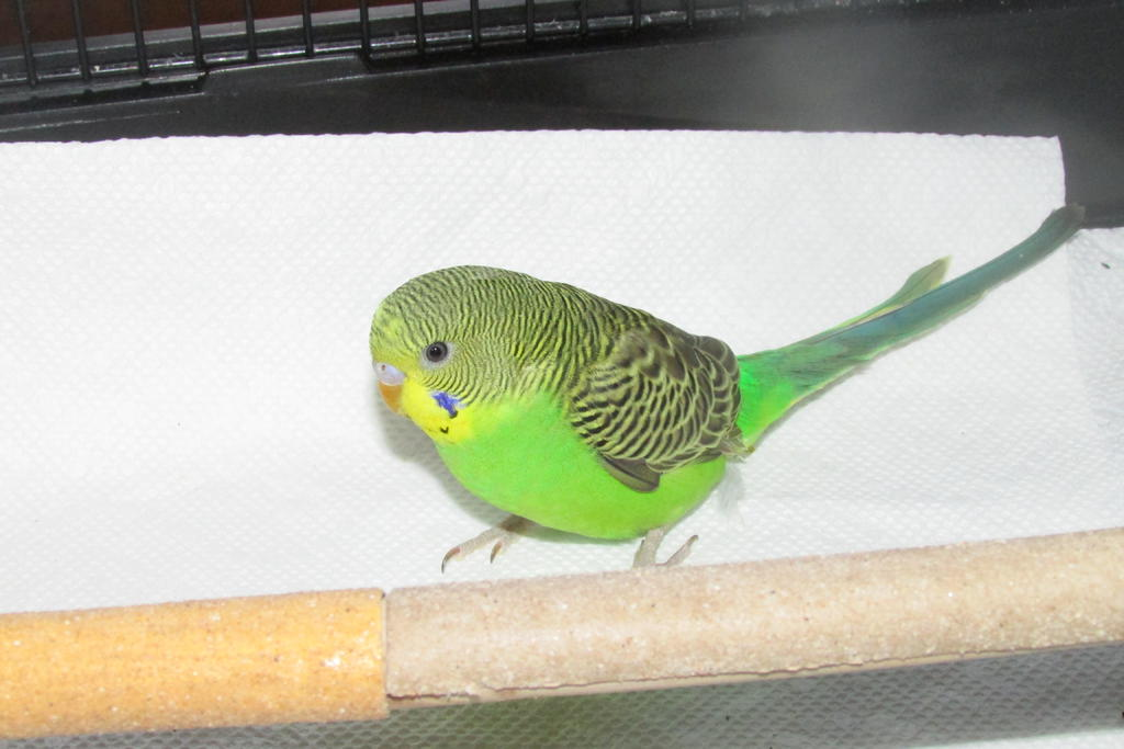 My New bird (Sage)-1.jpg