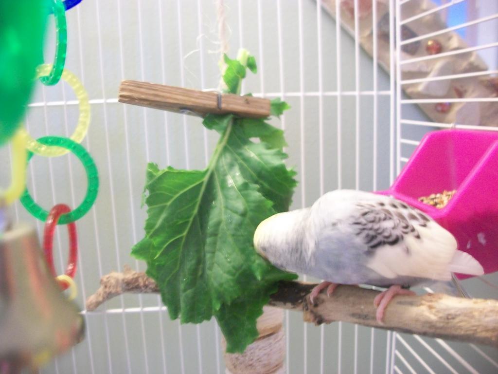 One idea for getting your birdies to eat veggies-100_0149.jpg
