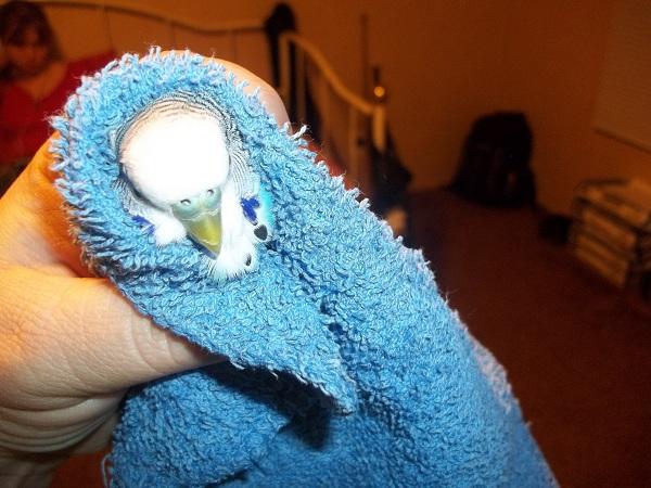What mutation/sex is this bird?-100_1404.jpg