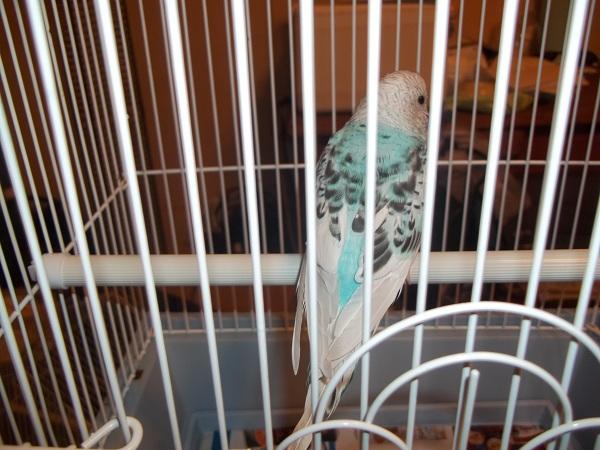 What mutation/sex is this bird?-100_1416.jpg