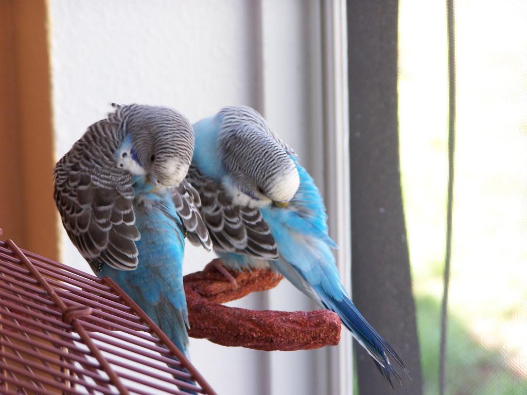 Margret and Mordecai-100_7110.jpg