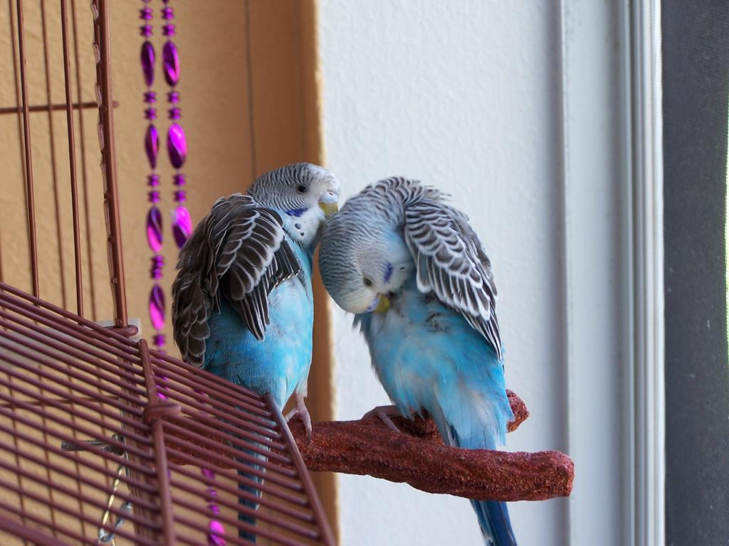 Margret and Mordecai-100_7111.jpg