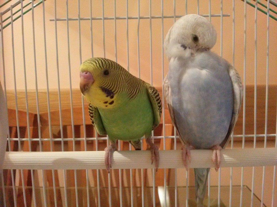 Kiwi and Luna :-)-10295695_622245584550306_5470686045598076336_n.jpg