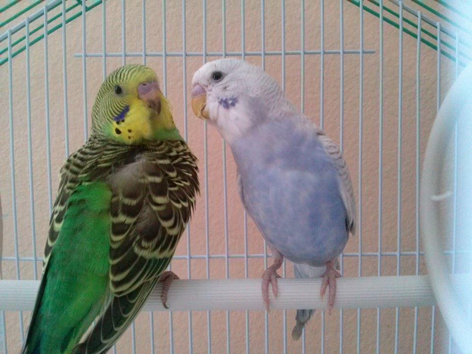 Kiwi and Luna :-)-10527775_622245541216977_4817680784144347602_n.jpg