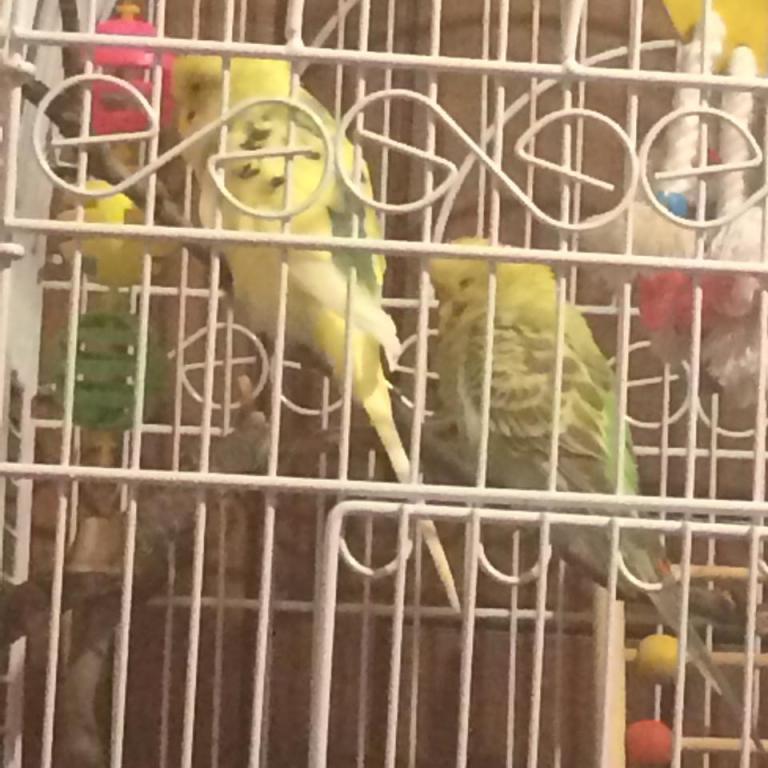 Happy birds-10836622_395122437313389_1271963002_n.jpg