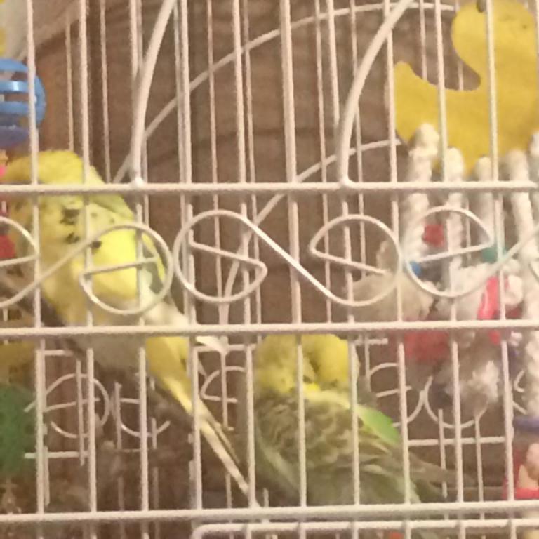 Happy birds-10850825_395134913978808_1302829864_n.jpg