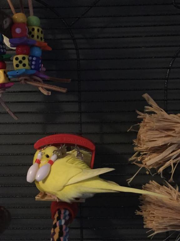 this is how ducky likes to sleep every night... :o-11195434_1033096343384715_1924235786_n.jpg