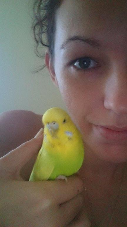 hello from a new member and her budgie-11208848_10153350810404529_1530554207_n.jpg