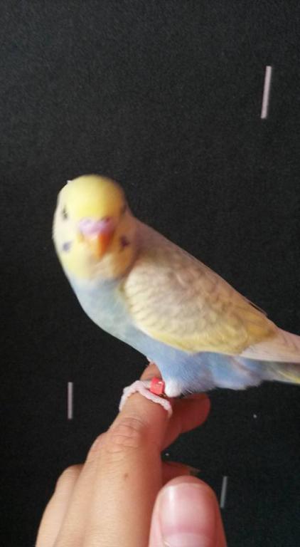 chicks mutations-11898529_10153100894502654_6630391864074299189_n.jpg