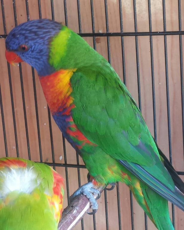 photos of my birds:)-12.jpg
