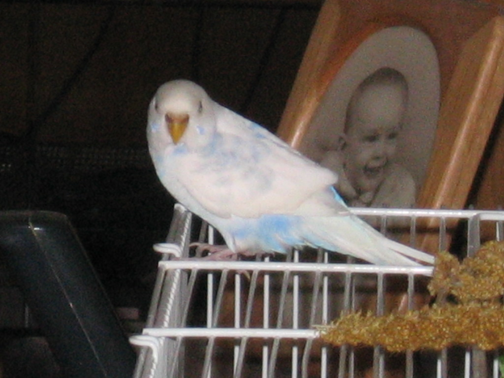 Why are babies cobalt blue rather than sky blue?-123007-2-noelle-looking.jpg