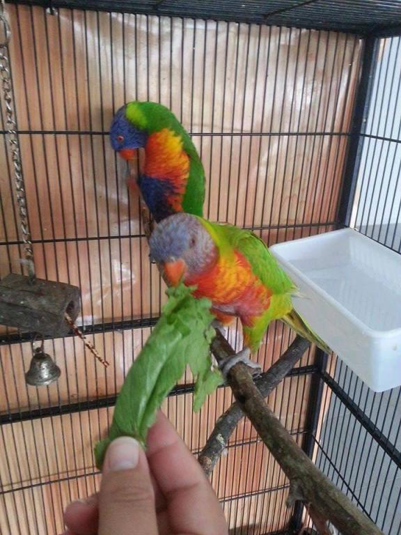photos of my birds:)-13.jpg