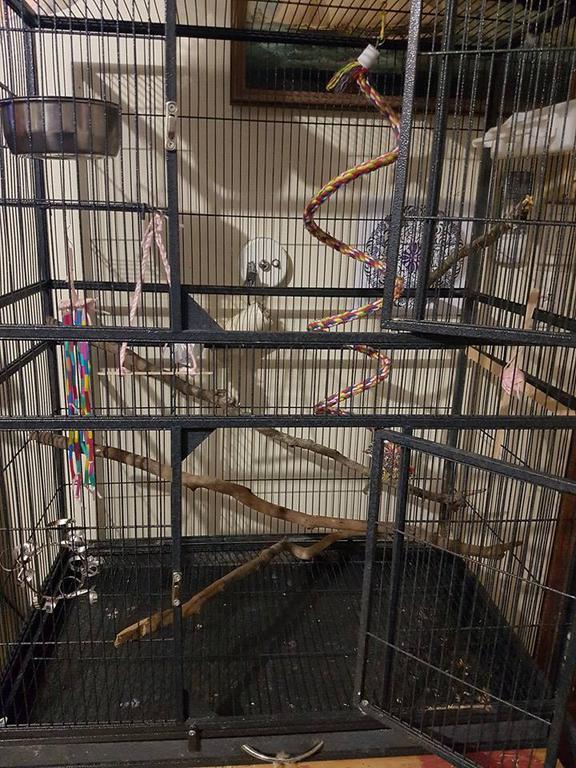 Cage set up-13239141_10206205821967713_6859049763502609996_n.jpg