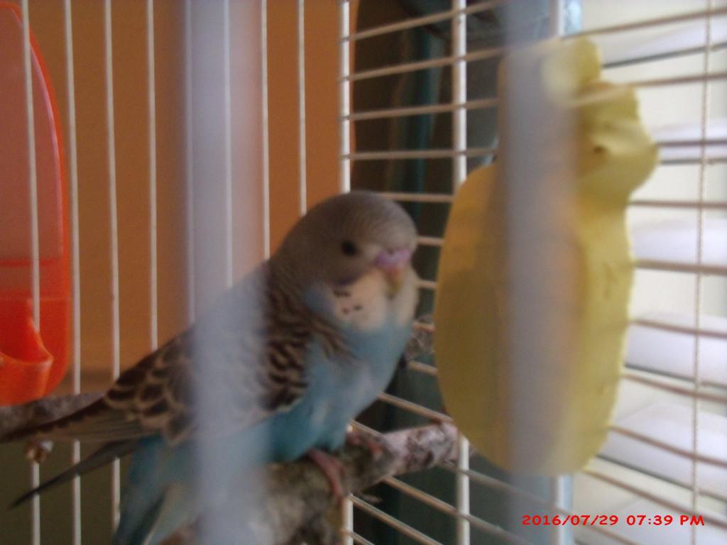 Hen or Cock-13731920_701738696630942_684913897899466026_o.jpg