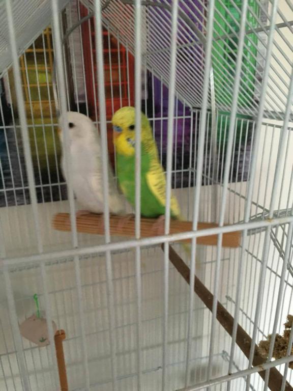 Two Unnamed Birds!-13950996_2080180885540816_339440374_o.jpg