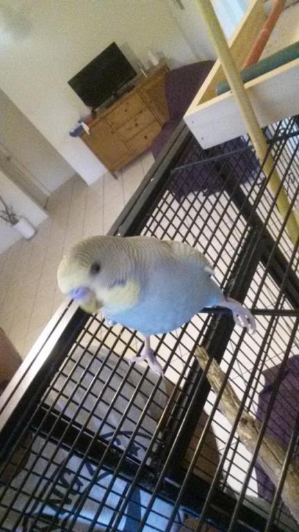 photos of my birds:)-14.jpg