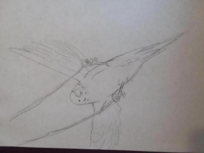 Henlo I drew scarlet macaw-15233143585811742196370_1523314382032.jpg