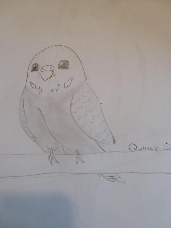 Henlo I drew scarlet macaw-1523314434326661013269_1523314488030.jpg