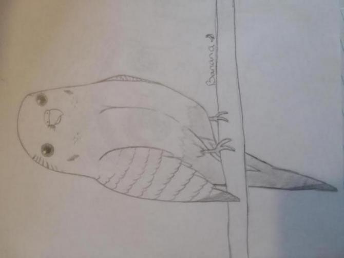 Henlo I drew scarlet macaw-1523314493355251759892_1523314506028.jpg