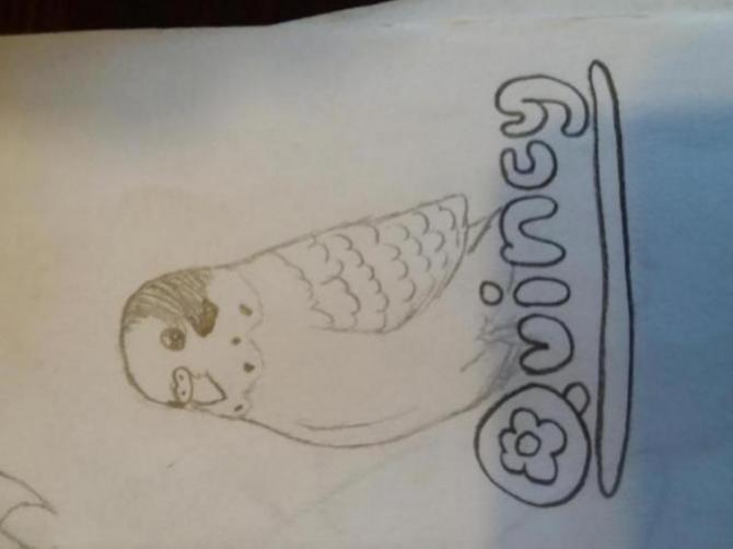 Henlo I drew scarlet macaw-1523314511768-1188689419_1523314543890.jpg