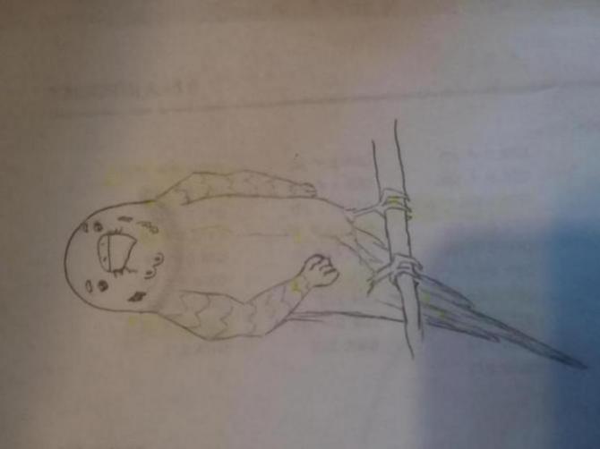Henlo I drew scarlet macaw-15233145757631938536612_1523314598480.jpg