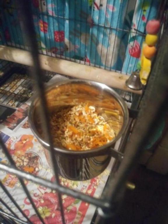 Food bowl-1545353461546132505395_1545353492799.jpg