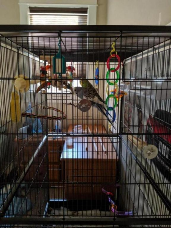 Burb Birb's Budgies (Ongoing Picture Thread)-15643672061332611802820263901300_1564367224338.jpg