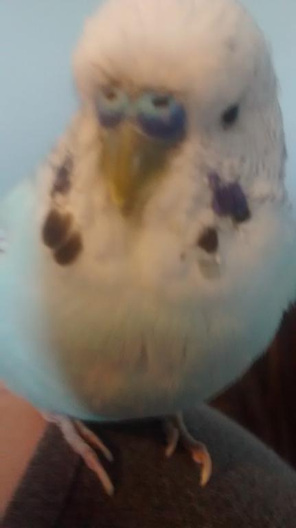 My handsome lil fatty-2014-11-10-14.47.57.jpg
