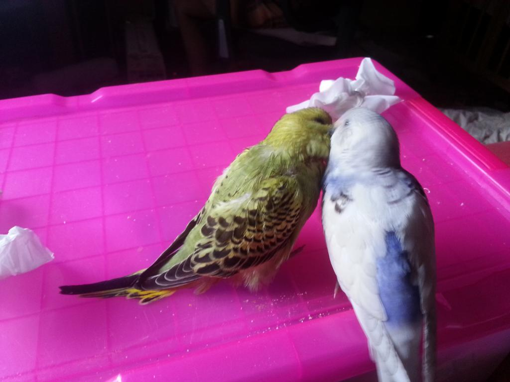 All feathered up-20140614_165436.jpg