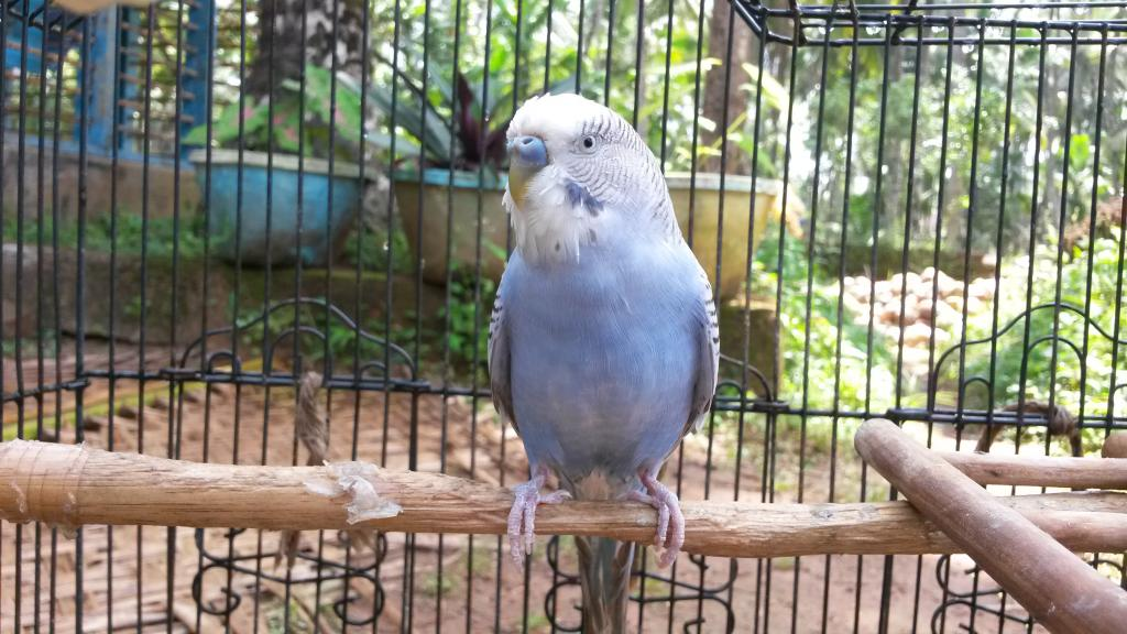 My budgie has a respiratory infection-20141017_124534.jpg
