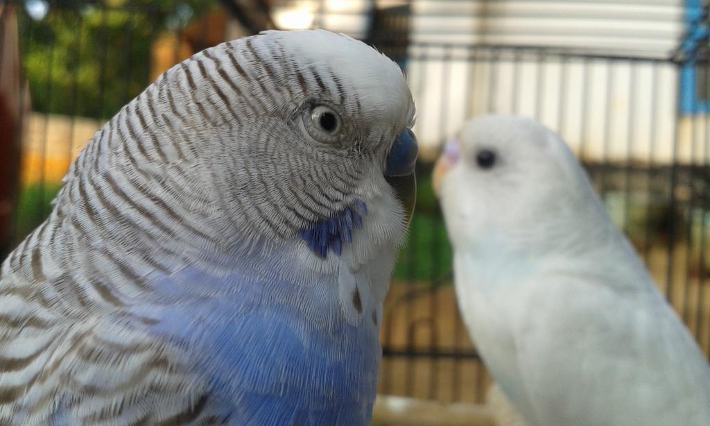 My budgie has a respiratory infection-20141112_163735.jpg