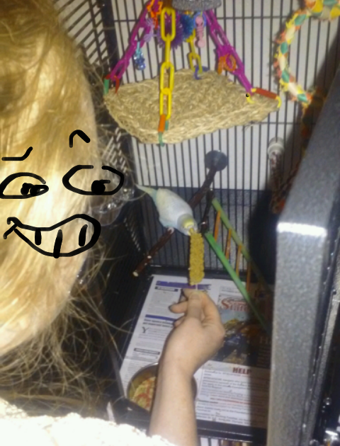 My budgie girl, Brine! :)-2015-09-27-16_1443499757424.19.51.png