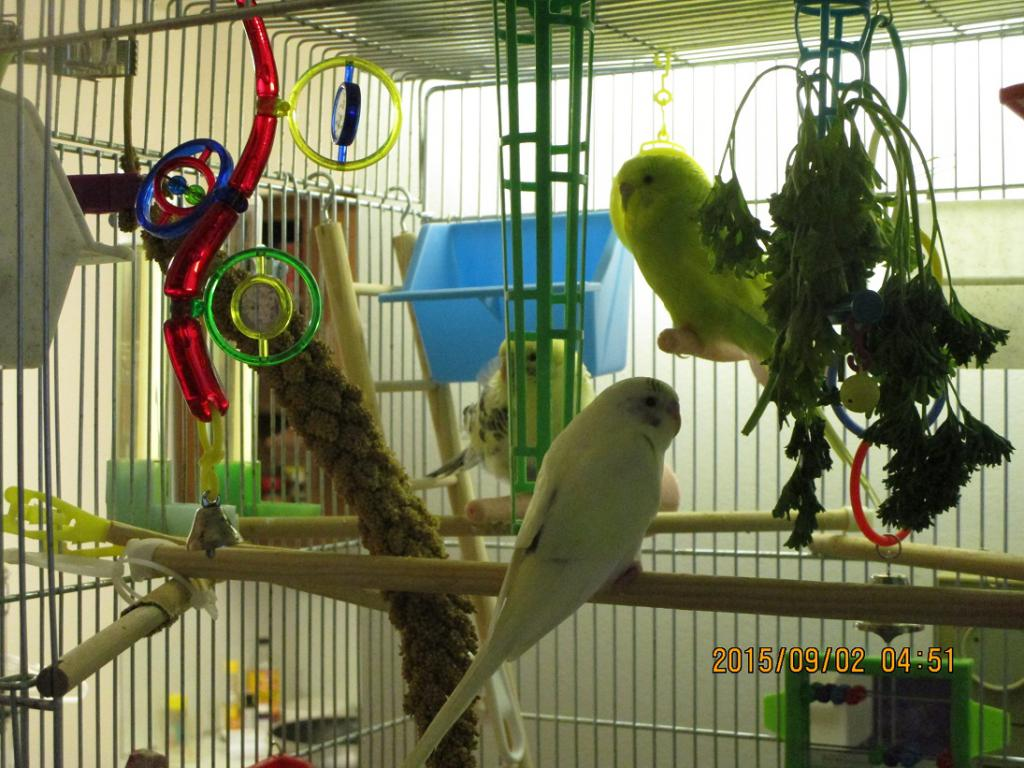 Frosty's Update Mixed Situation New Bird-2015-august-monday-31-weeks-stuff-069.jpg