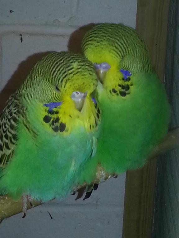 new chicks-20150104_094154.jpg